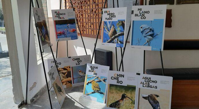 """La Muestra """"Aves"""" finaliza su visita en Camilo Aldao"""