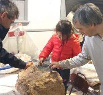 Arroyo Seco: Inició la limpieza y reconstrucción de la Macrauchenia