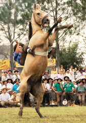 Arroyo Leyes: Festival de Jineteada